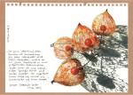Netz der Lampionblumen / CopyrightR.Geisler